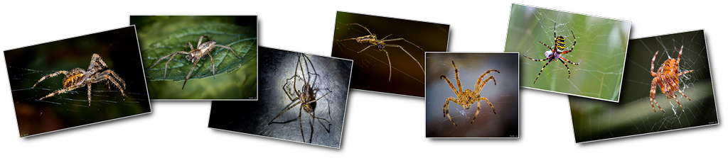 Photos haut arachnides 001 [1024x768 - 90 pourcent]