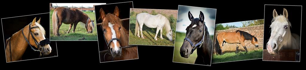 Photos haut chevaux 01 [1024x768 - 90 pourcent]