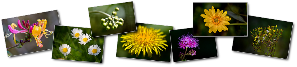 Photos haut fleurs [1024x768 - 90 pourcent]