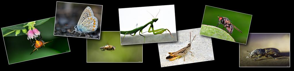 Photos haut insectes [1024x768 - 90 pourcent]