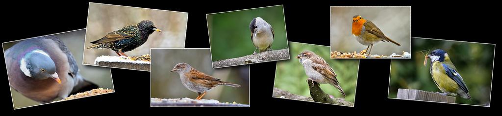 Photos haut oiseaux J [1024x768 - 90 pourcent]