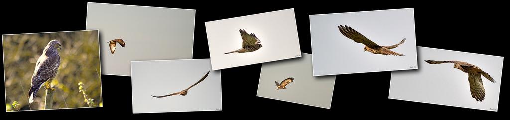 Photos haut oiseaux rapaces [1024x768 - 90 pourcent]
