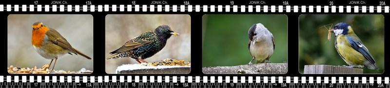 Photos négatif 2015_oiseaux 01 [800x600 - 90_pourcent]