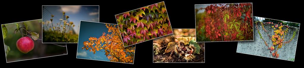 Photos haut automne [1024x768 - 90 pourcent]