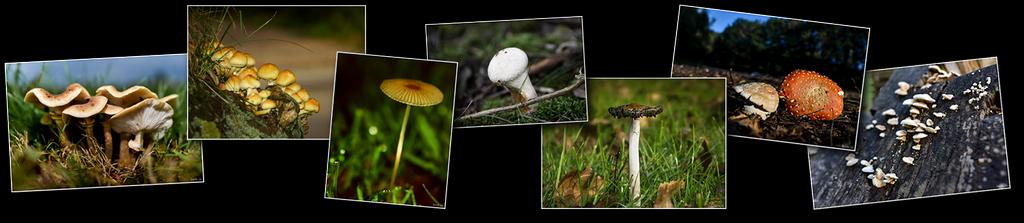 Photos haut champignons [1024x768 - 90 pourcent]